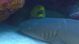 Eel and Shark in Coral Reef