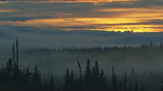 Eerie Misty Forest Sunset