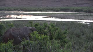 Elephant eating from a tree close to a lake in Kruger National Park South Africa