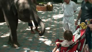 Elephant Grabbing Food With Trunk