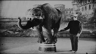 Elephant Performing Tricks on Stand in Vaudeville Show