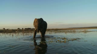 Elephant Walking Through Water