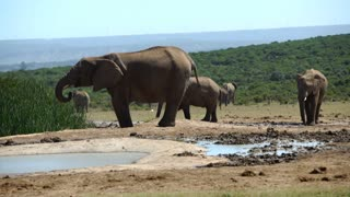 Elephants around a waterpool in Addo Elephant National Park South Africa
