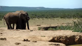 Elephants around the waterpool in Addo Elephant National Park South Africa