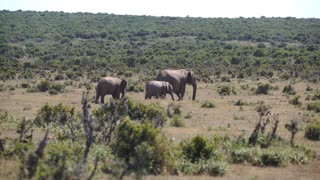 Elephants in Addo Elephant National Park South Africa