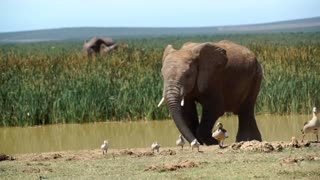 Elephants walking around a waterpool in Addo Elephant National Park South Africa