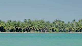 Exotic nature scene. Sea shore with many palms and clear blue water in foreground on bright summer day