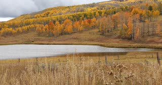 Fall foliage across a field and behind a lake