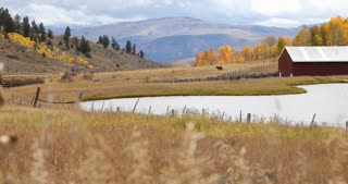 Fall foliage on a farm in Autumn in Steamboat Springs, Colorado