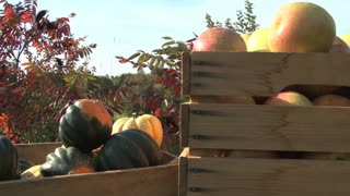 Fall Fruits and Veggies by the Water 6