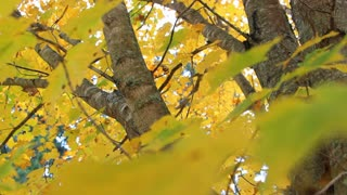 Fall Tree Foliage