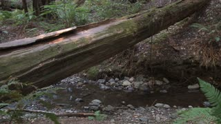 Fallen Tree Across Little Creek