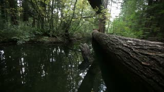 Fallen tree trunk bridge over water