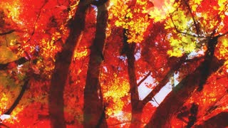 Falling Autumn Leaves 2