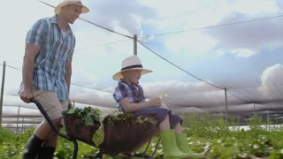 Farming father pushing son in wheelbarrow full of lettuce produce on their farm.