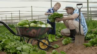 Farming father teaching son about insects and crop bugs on the lettuce field on their farm.