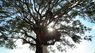Farther Shot of Children in a Tree