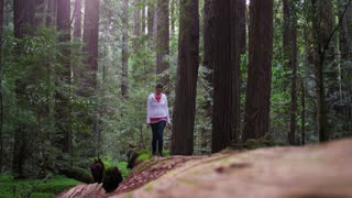 Female Hiker Walking on Fallen Redwood Tree