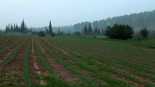 Field of Green Rows of Vegetables 2
