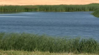 Field Surrounding Lake