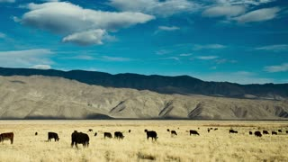 Fields Cattle and Mountains Time Lapse