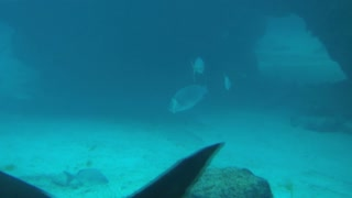 Fish and Shark in Front of Sea Floor Rocks