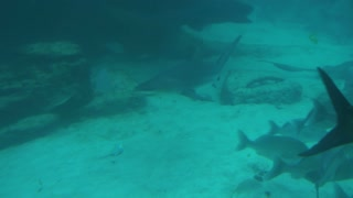 Fish and Shark Swimming Along Sea Floor