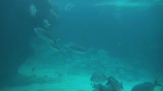 Fish and Sharks in Murly Blue Water