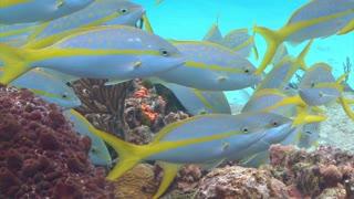 Fish Scouring Ocean Floor