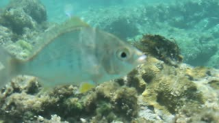 Fish Swimming Through Coral Reef