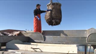 Fisherman Dumping the Halibut Bucket