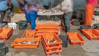 Fisherman worker sorting fish at port of Sesimbra, Portugal timelapse 4K