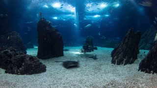 Fishes in Lisbon Oceanarium passing by with rocks, Portugal timelapse 4K