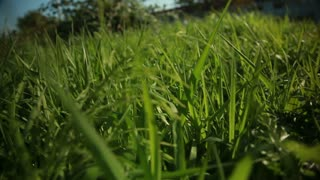Fisheye view of grass