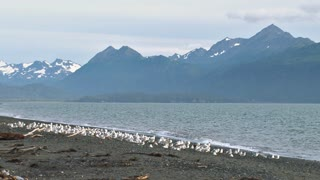 Flock of Gulls Flying From Beach with Mountain Range in Distance