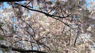 Floral Tree Hideaway