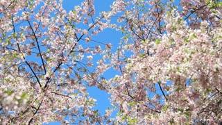 Flourishing Blossom Petals