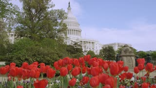 Flower And Capitol Building