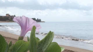 Flower and Hawaii Beach