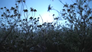 flower field tee sun nature slow motion 1080