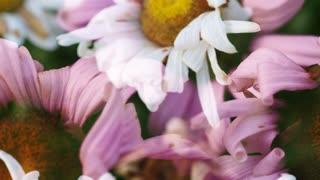Flower Spin