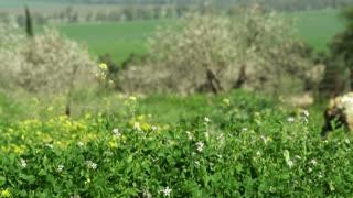 Flowered Meadown Surrounding Farmland