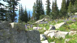 Flowers Boulders And Trees