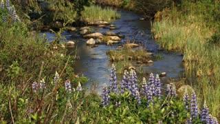 Flowers By Mountain Creek