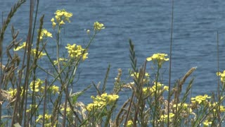 Flowers Swaying Against Blue Waves