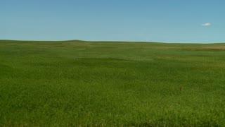 Flowing Grass Landscape Timelapse