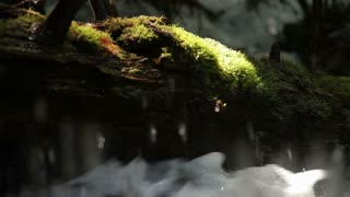 Flowing Stream Splashing in Front of Moss Covered Log