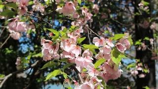 Fluttering Blossom Petals