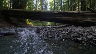 Fly Over Fallen Tree Across Stream in Redwood Forest