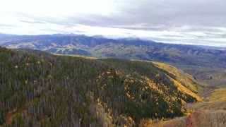 Flying backwards over a forest of golden Aspen trees in autumn with fall foliage